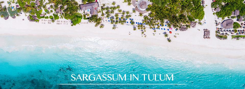 Mexico Beaches Seaweed: Sargassum in Tulum