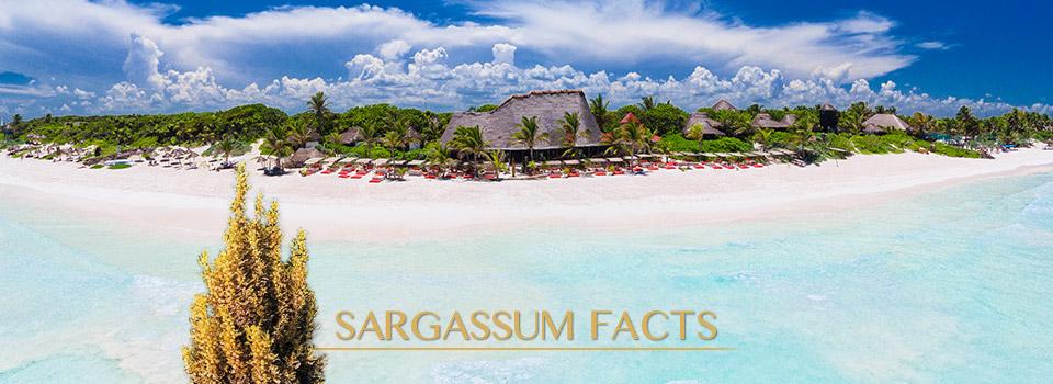 Sargassum Facts